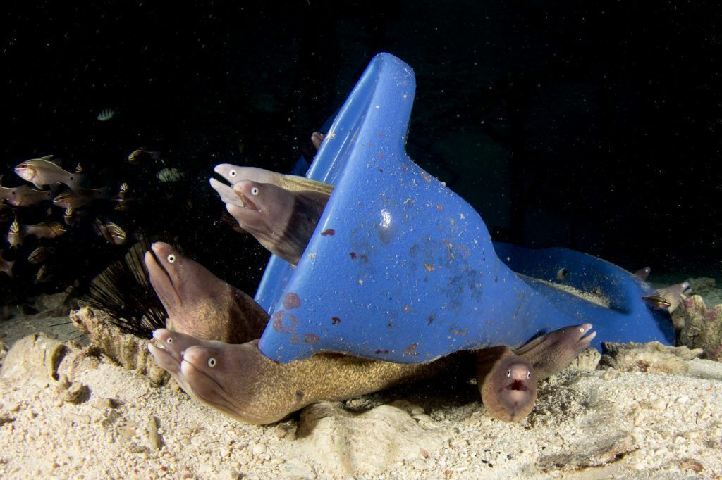Plastic toilet dumped in ocean, becomes home for moray eels